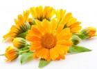Маска из цветков календулы