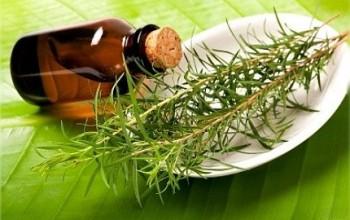 Положительные свойства масла чайного дерева